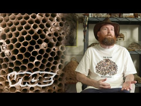 The Hornet Boy: Collecting Wasp Nests as Therapy