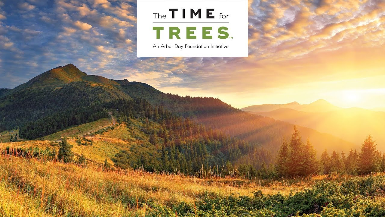The Time For Trees Initiative Youtube