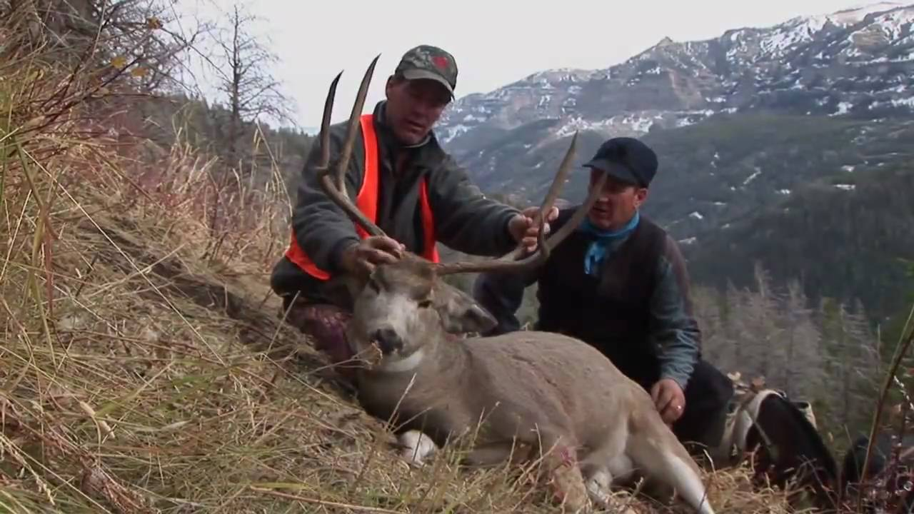 Vertical Shot On Mule Deer Ishawooa Outfitters Cody