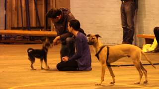 Cardiff Canine Citizens- Puppy Returners Class