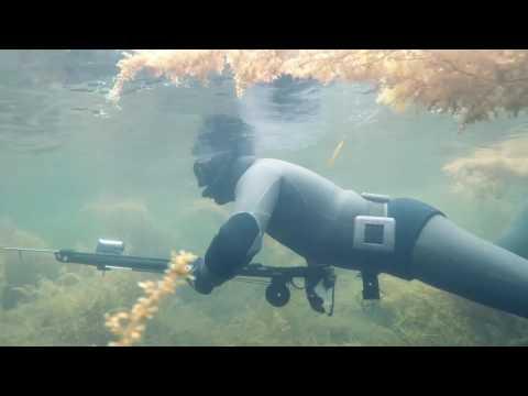 Пасмурный день. Подводная охота Владивосток