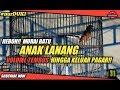 Heboh Murai Batu Anak Lanang Volume Tembus Hingga Keluar Pagar  Mp3 - Mp4 Download