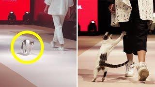Бездомная кошка пробралась на показ мод и научила моделей ходить по подиуму