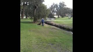 Harry Pywell Dog Training - Go To Marker 2