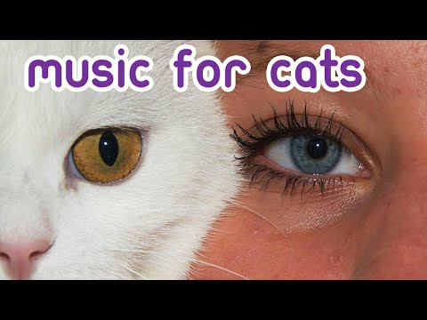 ULTRACALMING Music for You and Your Cat! Self Isolation Relaxation