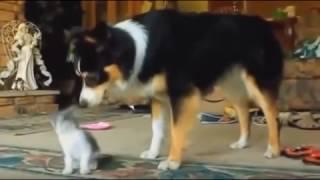 Коты и собаки - лучшие друзья (Cats and dogs are the best friends)