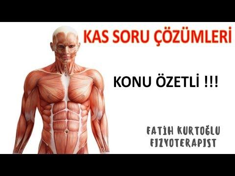 Konu Özetli-Kas | Anatomi Öğreten Örnek Sınav Soruları 8