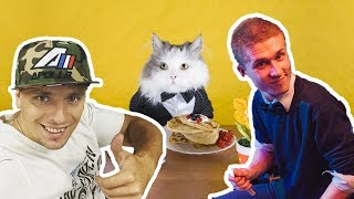 Сколько смогут съесть бездомные кошки?