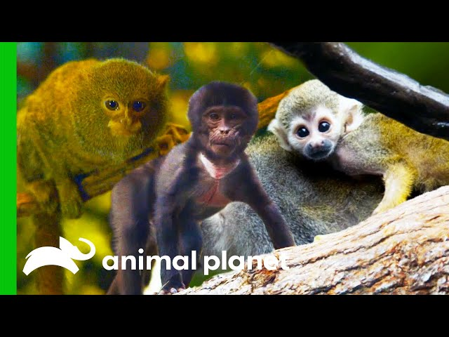 Cute and Adorable Primates | The Zoo