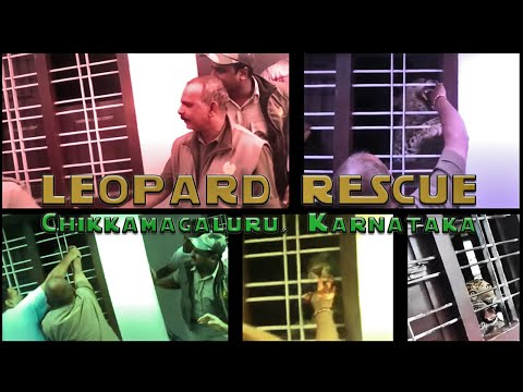 Leopard Attack in India, Karnataka
