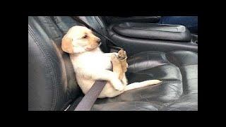 Chú Chó Đáng Yêu Nhất Hành Tinh Là Đây Đúng Không -  MEOMEOTV ✔