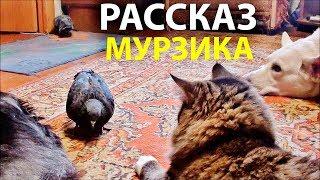 Рассказ кота Мурзика (ворона, кот, собаки, голуби)