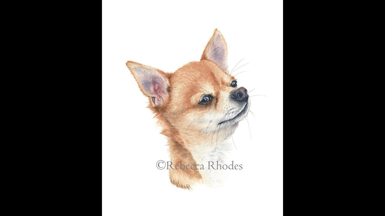 Watercolor Painting Tutorial Chihuahua Dog Youtube