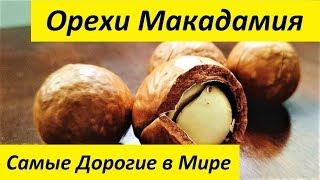 Орехи Макадамия Самые Дорогие Орехи в Мире