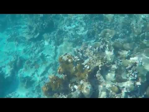 Bluefields Bay Villas - Snorkeling at Moor Reef