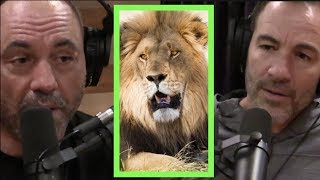 Rogan & Callen Talk Africa, Mosquitoes, and Scary Animals