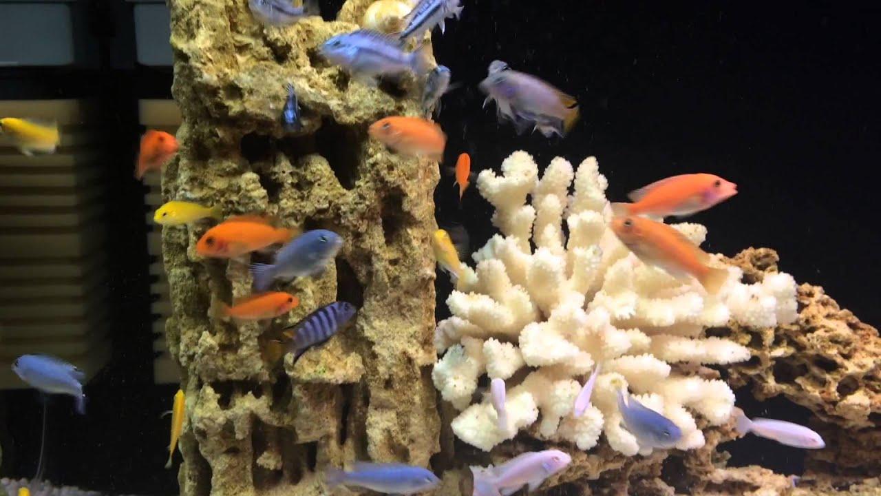Циклоп в аквариуме