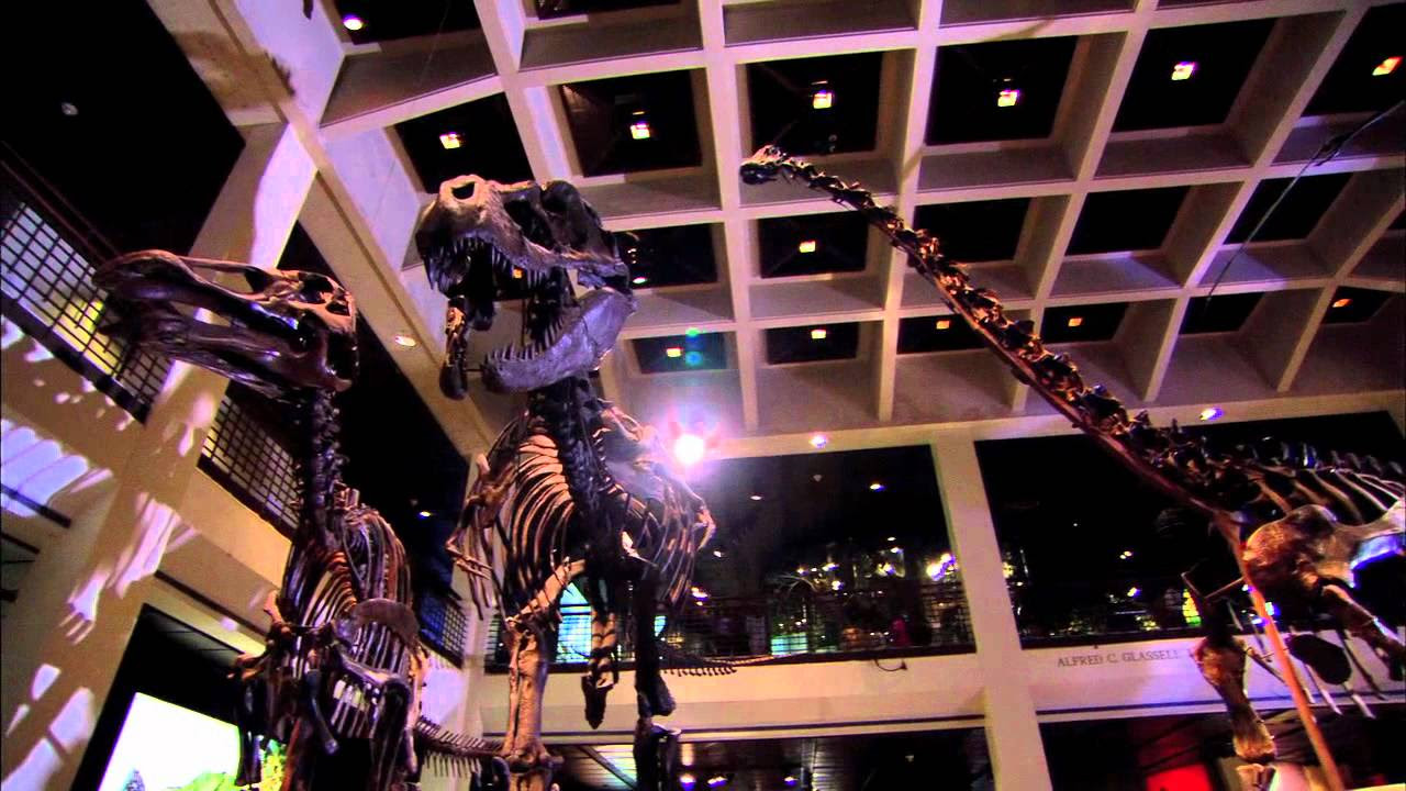 Houston Museums Science Art Childrens  History - Museums on us list