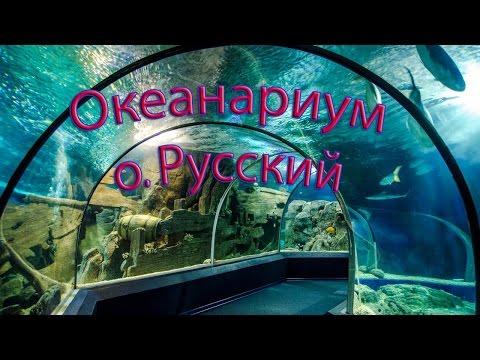 Океанариум на о.  Русский  - уникальные бассейны с аквакультурой/ Лучше смотреть  вживую,.