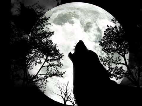 Orkhon - Волчья любовь [2012]. Слайдшоу картинок про волков