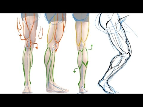 How to Draw the Muscles of the Leg - the Easy Way! - YouTube