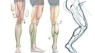 How to Draw the Muscles of the Leg - the Easy Way!