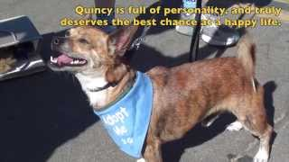 "Introducing ""quincy"" - Available To Adopt!"