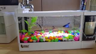 ????淘趣購????夢幻水晶宮 迷你高清玻璃多功能魚缸〈中缸〉????〈非低廉貨〉USB魚缸USB桌面魚缸USB水族箱迷你水族箱交換禮物