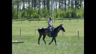 BLUE - Blue Roan Quarter Horse
