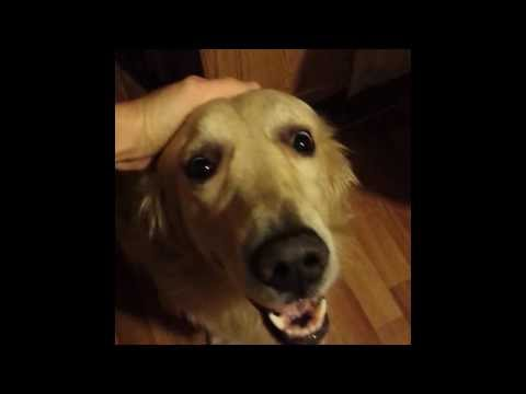 Spyke-my dog vine(by Tim Travis)