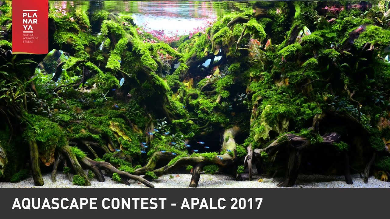 AQUASCAPE CONTEST - APALC 2017 - YouTube