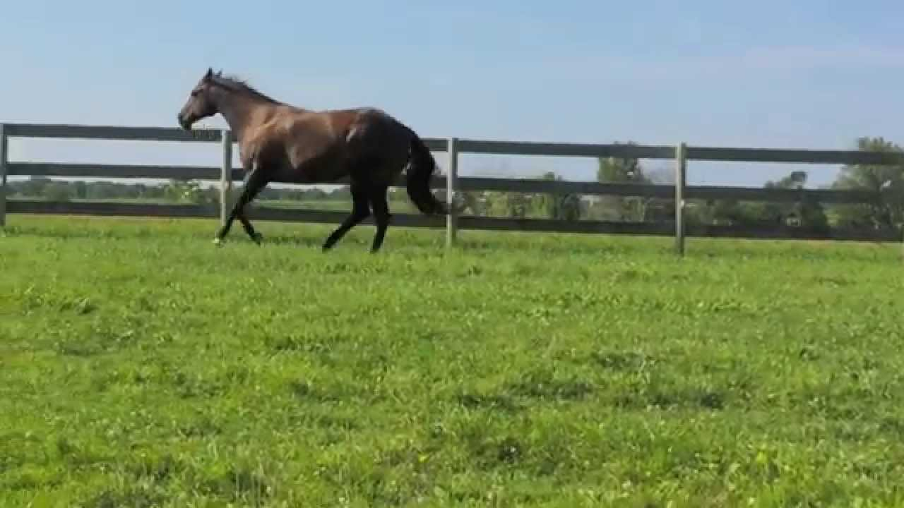 Invitation Only x Hotrodders Jet Set Daughter ~ BROODMARE - YouTube