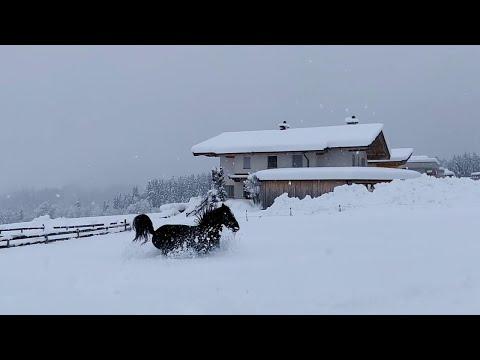 Bob Hauer - Horses Frolic in Freshly Fallen Snow