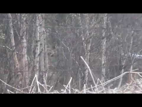 медведь шатун фото мульти