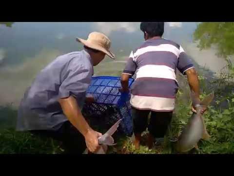 Catfish fishing ,Cau ca giai tri,Ho cau ham tan phuoc hiep cu chi