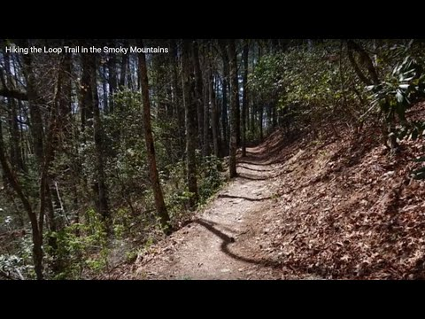 Hiking the Loop Trail in the Smoky Mountains