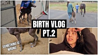SOMETHING IS WRONG With The Baby's Legs | My Pregnant Horse Pt.15
