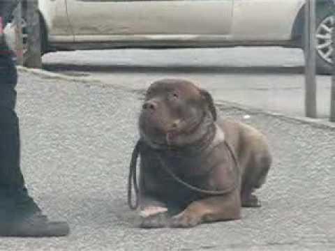 SOP - srpski odbrambeni pas