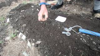 Video planting seeds