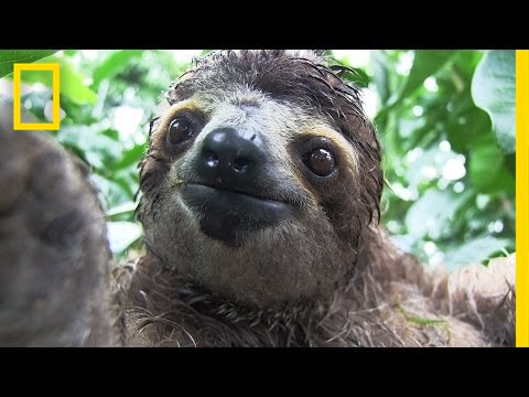 Inside A Baby Sloth Orphanage And Rescue Center National