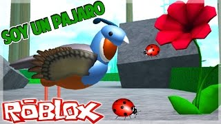 ROBLOX - Flying I'm going! Flying I'm coming!!! - Bird Simulator