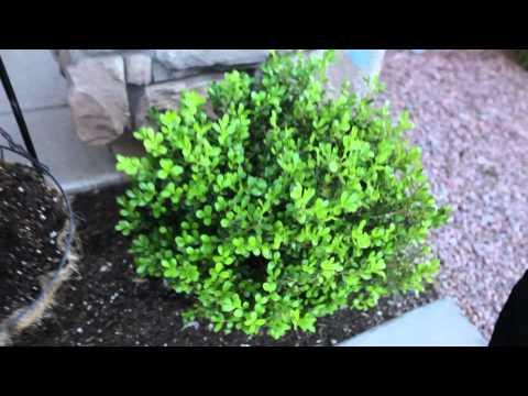 The Eco Shield Pest Control Service
