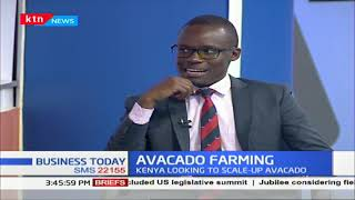 Avocado Farming:  Kenya looking to scale up avocado production