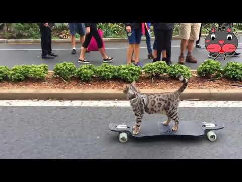 Boomer Le Chat Skater