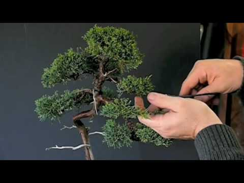 Pruning Techniques for Juniper