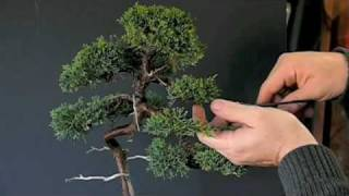 Pruning Techniques for Juniper