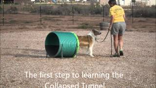 Dog Agility Classes In Cedar City, Utah