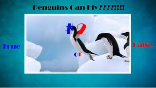 Penguins Can Fly!!!!!!!! - True or False #2