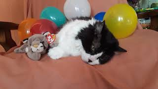 Birthday wishes to our friend Debi🎈🎁#cutecats