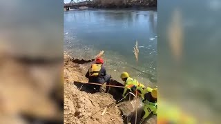 Brave Firefighters Save 1-Year-Old German Shepherd Trapped In Frozen River